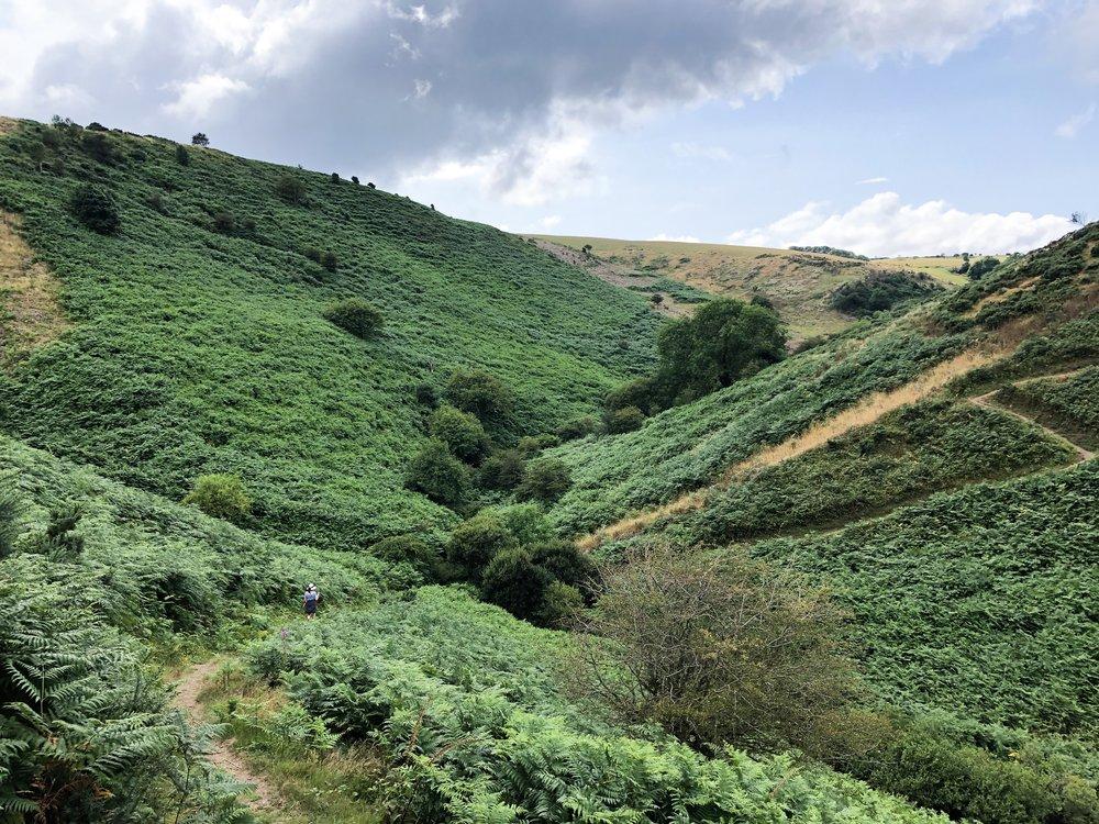 Green+fields+in+North+Somerset