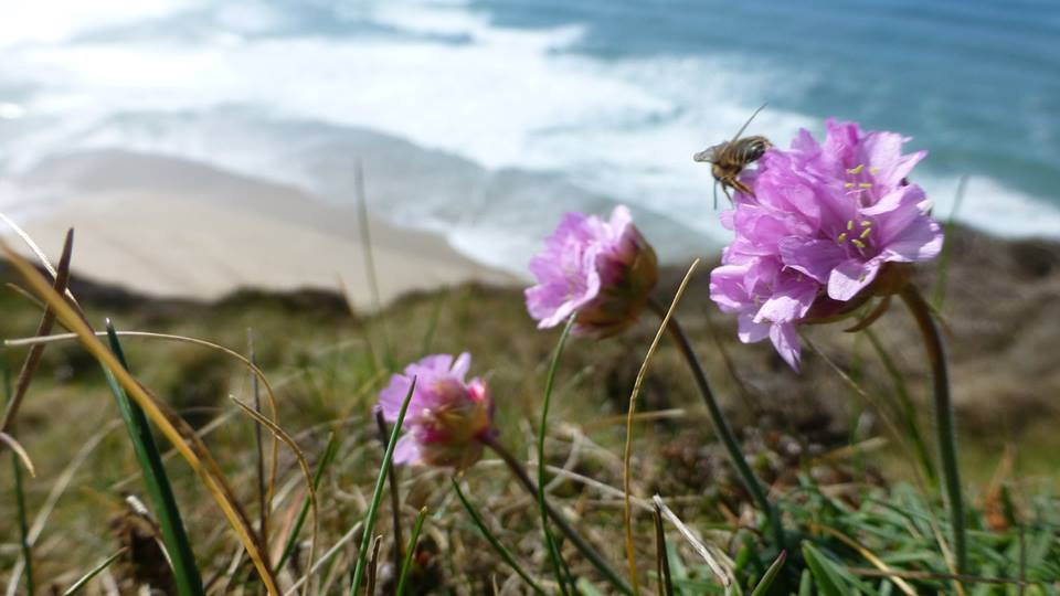 Coast Path bee habitat at St Agnes by Jen Gregory